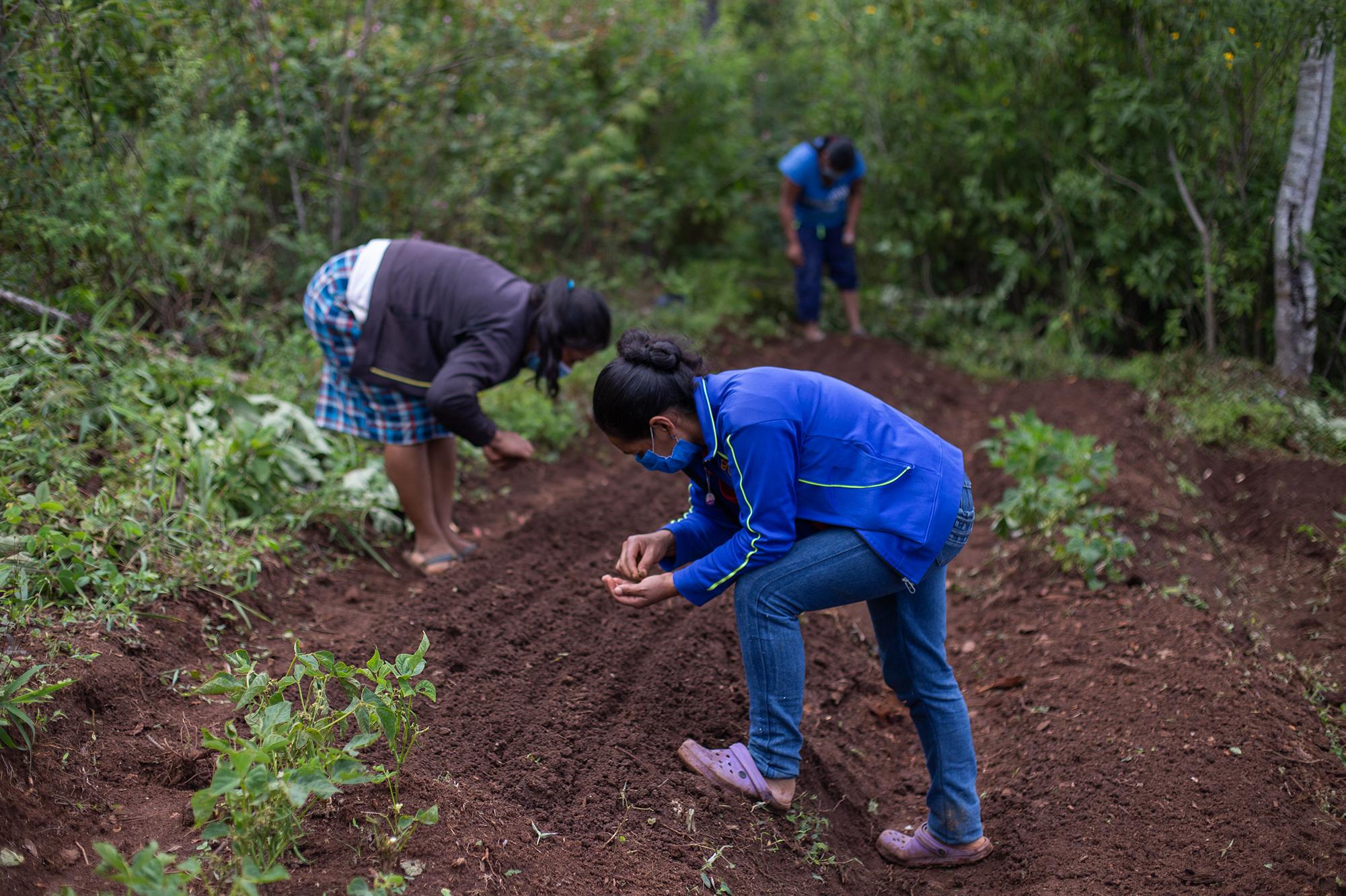 Un grupo de mujeres siembra semillas de rábano. Santa Elena, La Paz, 21 de octubre de 2020. Foto: Martín Cálix.