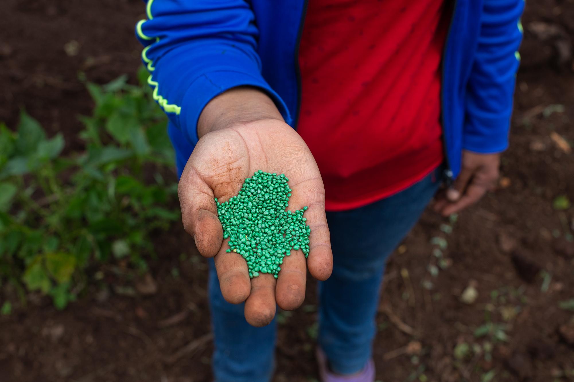 Una mujer muestra semillas de rábano que siembra en una hortaliza donde trabajan hombres y mujeres por igual. Santa Elena, La Paz, 21 de octubre de 2020. Foto: Martín Cálix.