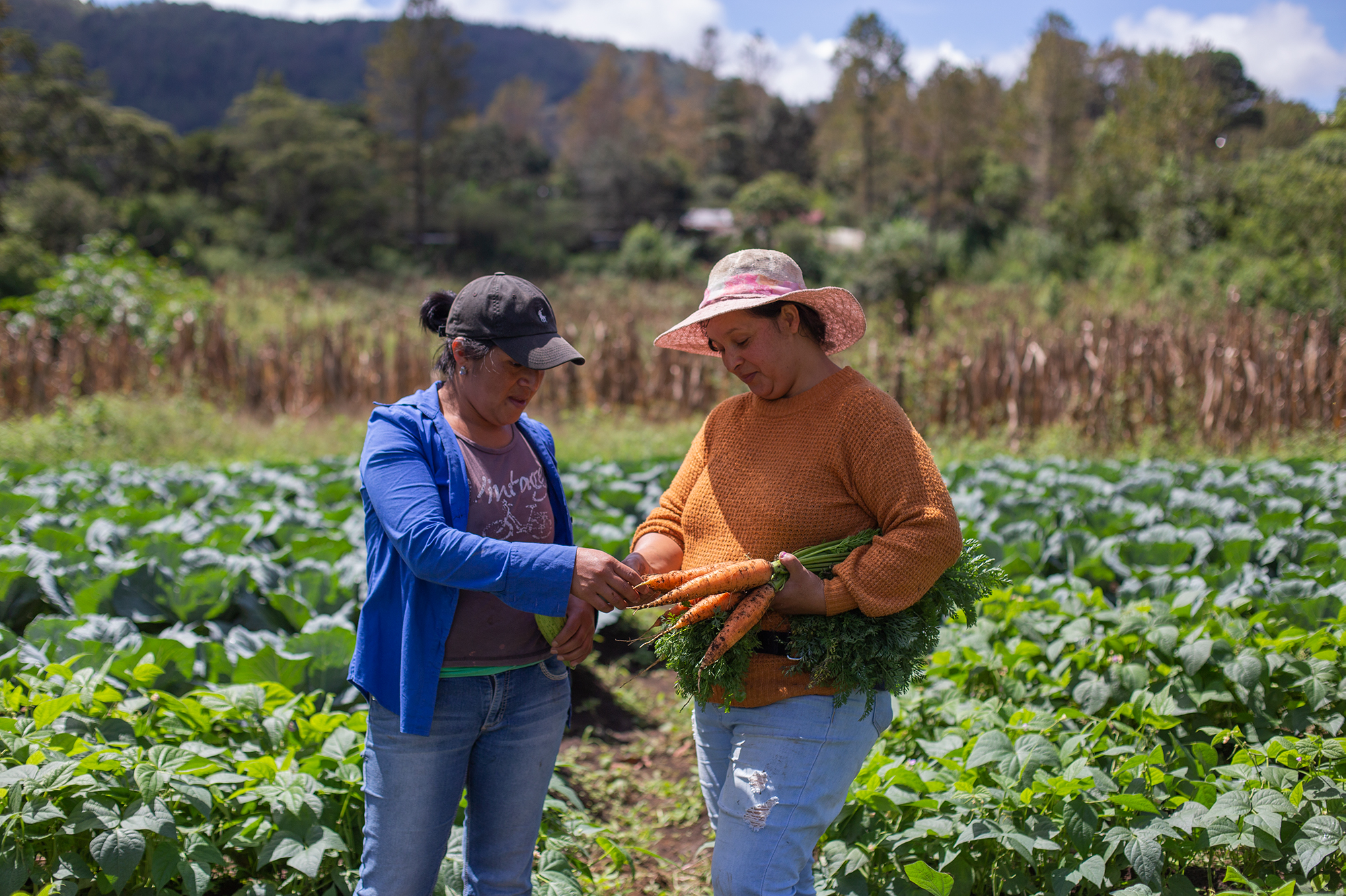 Elda y Dina revisan unas zanahorias que han cosechado en su hortaliza. Chinacla, La Paz, 20 de octubre de 2020. Foto: Martín Cálix.