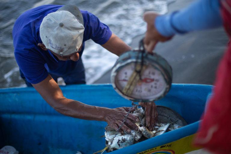 Luego de 5 horas, Omar de 55 años, un pescador con 30 años de experiencia, apenas ha logrado conseguir 15 libras de pescado que un mar infectado de basura le ha podido dar. Omoa, Cortés, 29 de septiembre de 2020. Foto: Martín Cálix