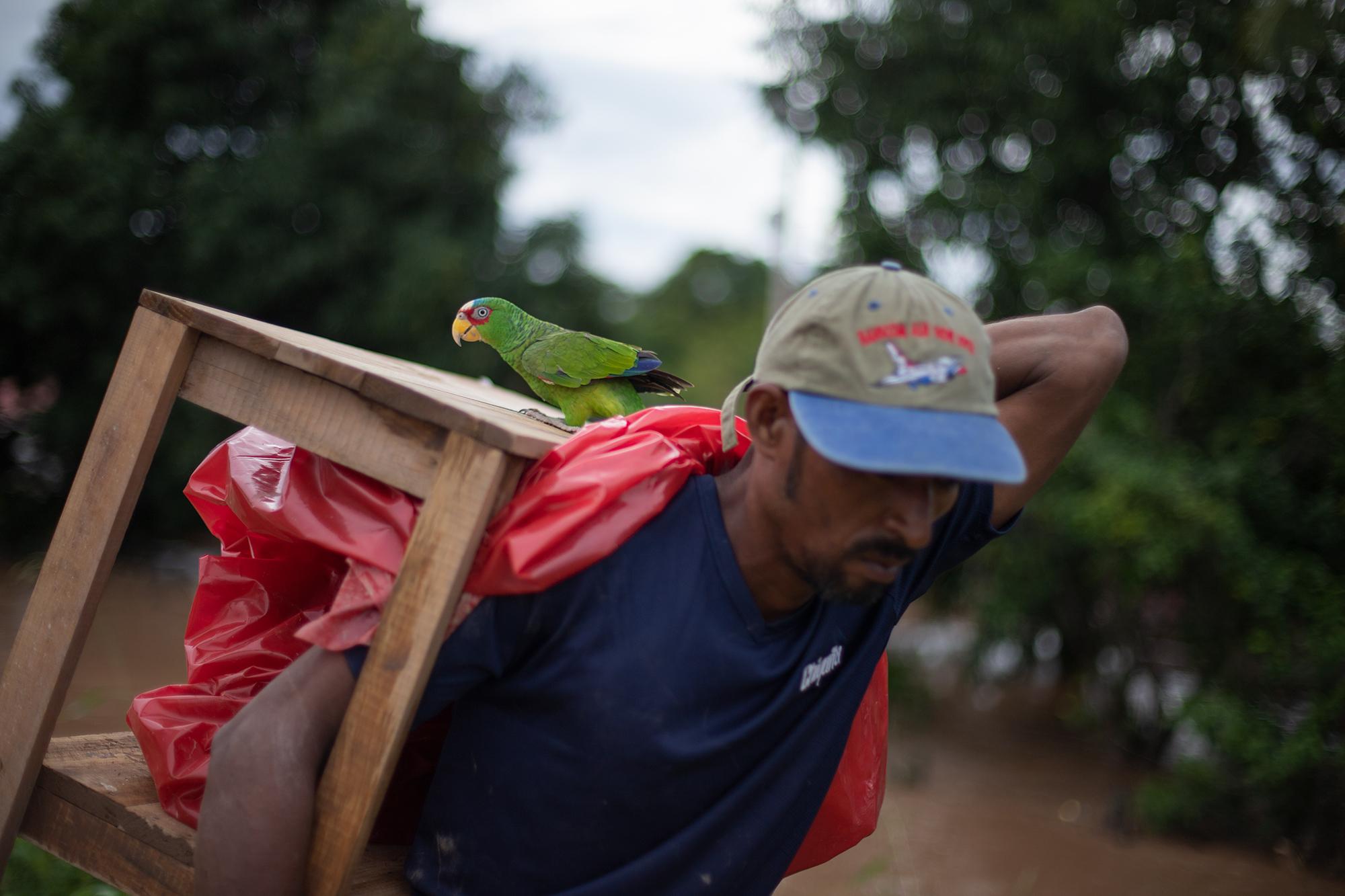 Un vecino de los bordos del río Ulúa rescata una mesa y a su mascota. Las comunidades a la orilla del río se encuentran inundadas debido al aumento del cauce, tras el paso de la tormenta tropical Iota. San Manuel, Cortés, 18 de noviembre de 2020. Foto: Martín Cálix.
