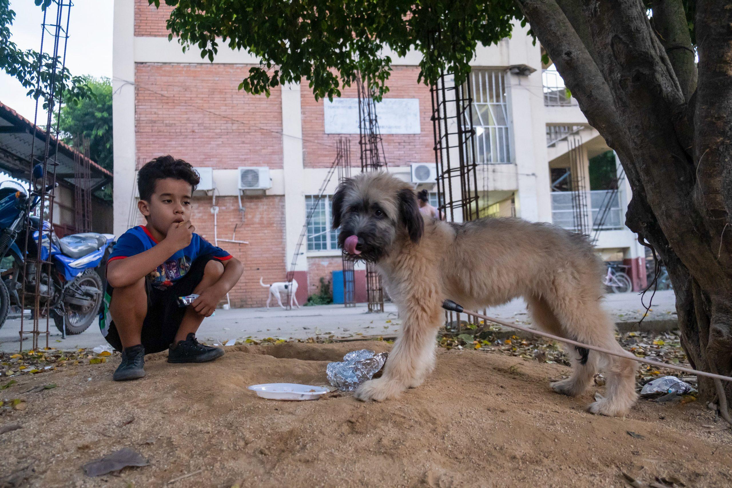 Un niño alimenta a su cachorro, ambos están albergados en el Instituto Eduardo Hernández Chévez. El Progreso, Yoro, 9 de noviembre de 2020. Foto: Deiby Yanes.