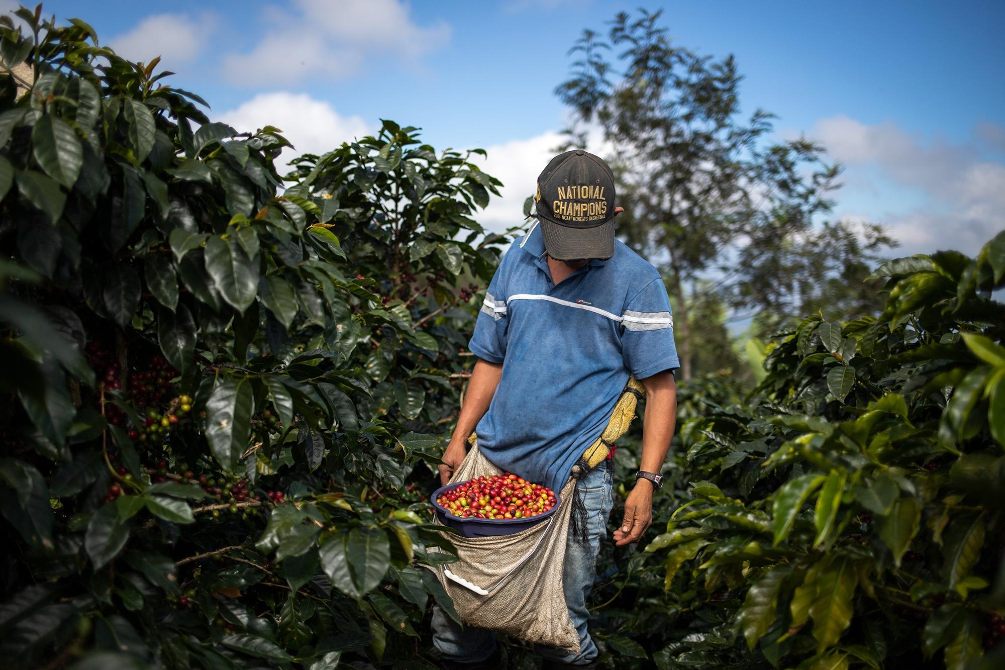 William, originario de la comunidad de Azacualpa en el municipio de La Unión, Copán, alterna trabajo entre las plantaciones de café y la mina San Andrés en su comunidad. Corquín, Copán, 27 de febrero de 2021. Foto: Martín Cálix.