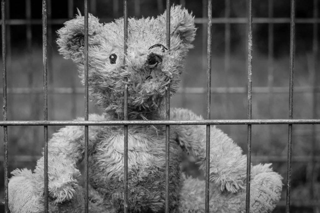 oso de peluche | migrar
