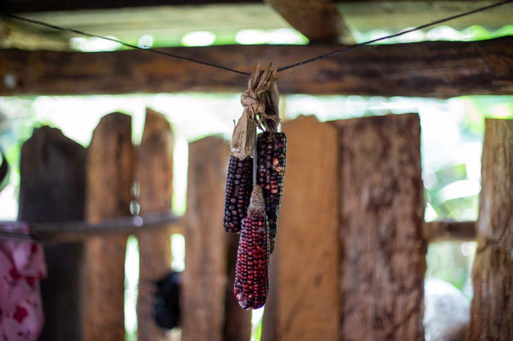 Tres mazorcas de maíz cuelgan de una cabuya en la cocina de un hogar. El maíz es uno de los alimentos elementales de las familias lencas de la sierra. Opatoro, La Paz, 8 de agosto de 2020. Foto: Martín Cálix
