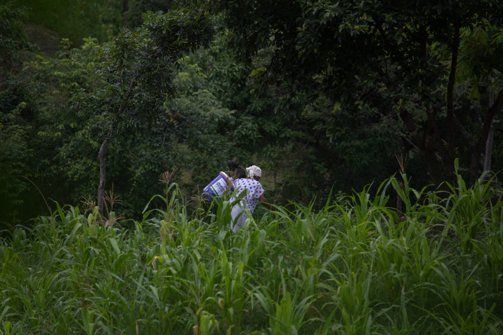 Un mujer atraviesa un maizal con un filtro de agua en sus espaldas. El filtro de agua, entregado por la Cruz Roja Hondureña, ayudará a que su familia purifique el agua que consume directamente desde la fuente de agua más cerca, es lo más cercano en este momento a la potabilización. Curarén, 27 de agosto de 2020. Foto: Martín Cálix